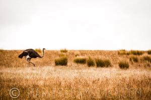 wildlife-12